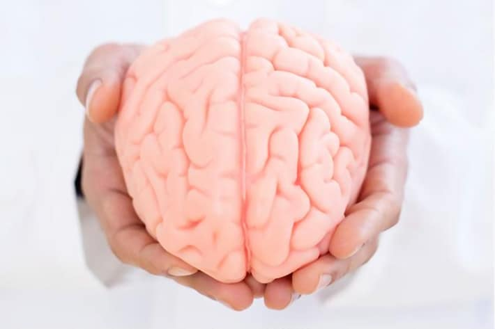 Neurologist holding brain model